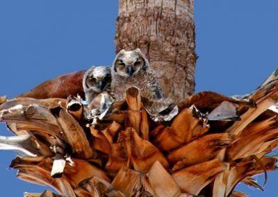 Wildlife near Bonita Vista Resort