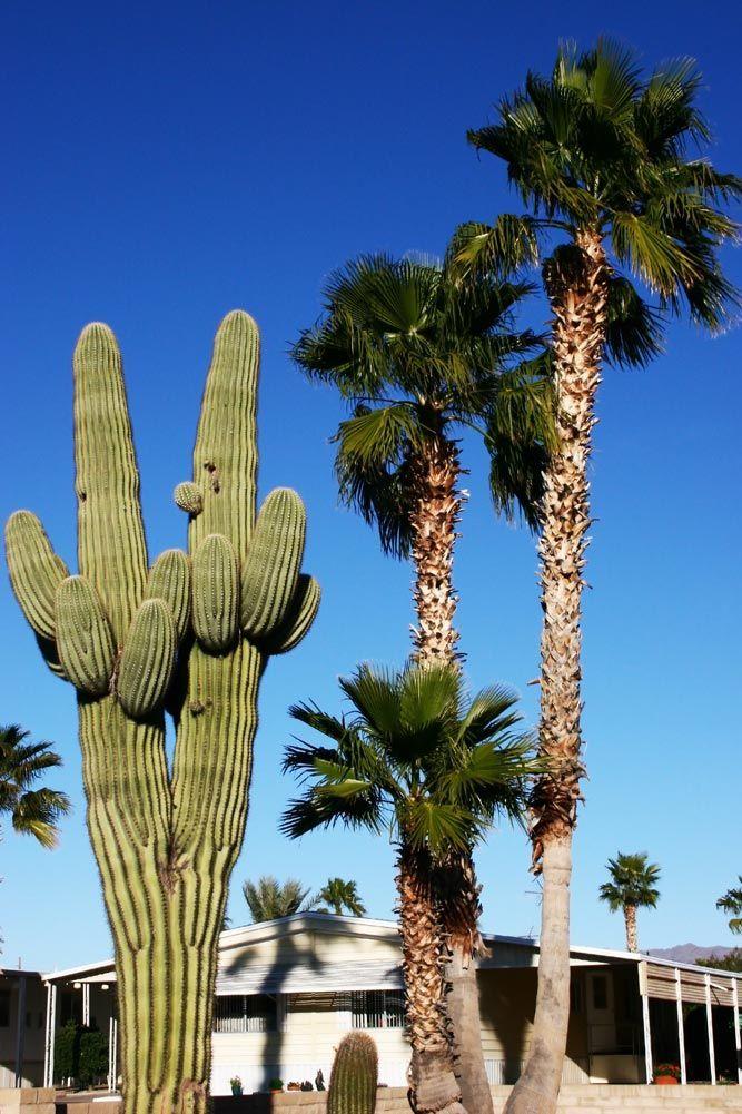 There's plenty to do near our Apache Junction, AZ RV Park